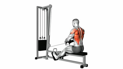 Seated Cable Row Workout Guide