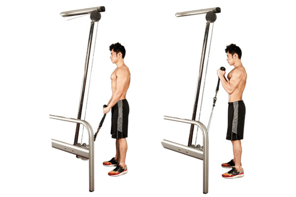 Cable Hammer Curl.