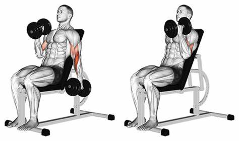 Incline Dumbbell Curl -Biceps Exercise.