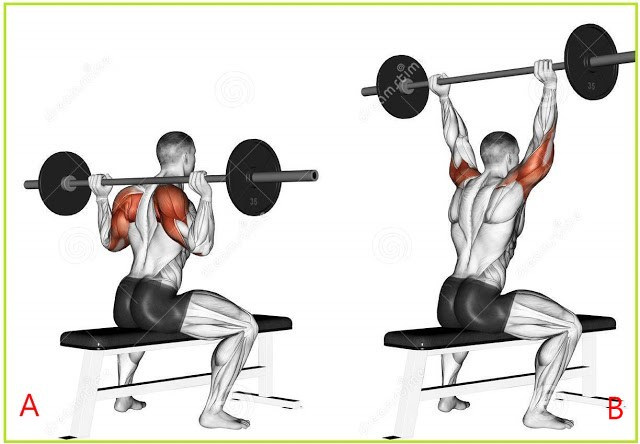 Seated Military Barbell Behind Necks Workout Guide